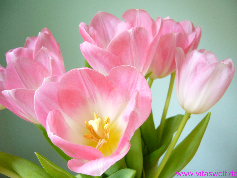 Blumen-florale designs - Willkommen auf vitaswelt