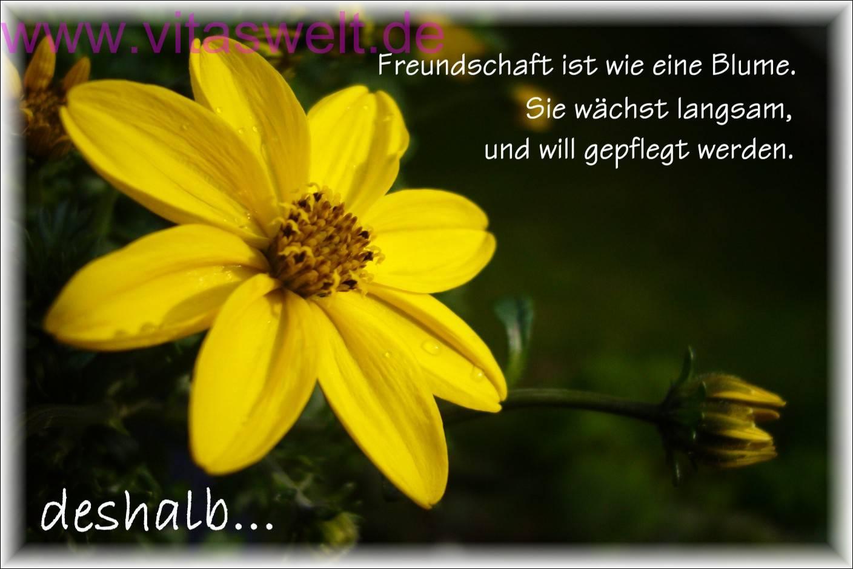 Blumen florale designs willkommen auf vitaswelt - Blumen zitate ...